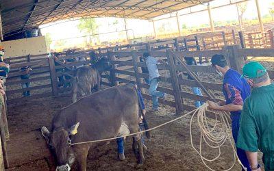 Nossa Medicina Veterinária agora tem Fazenda Escola